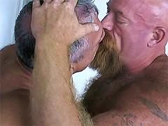 Tough bears lick cock and fuck ass