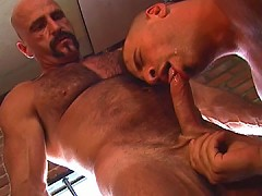 Thick bears suck and fuck their cocks